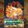 舞台「MARIGOLD〜絶望の花言葉〜」